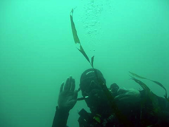 Picture of diving in the UK