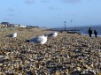Seagulls enjoying a clean beach