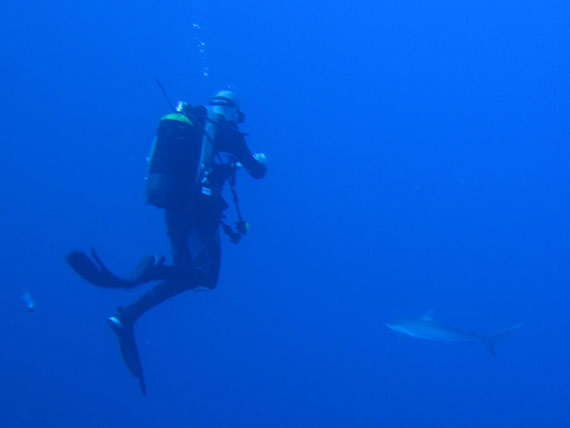 Picture of a Silky Shark in the Red Sea