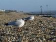Sea birds: safer on dry land...