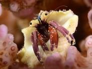 Hermit crab picture, taken properly