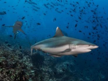 See sharks, earn for your club - photo credit: Simon Lorenz
