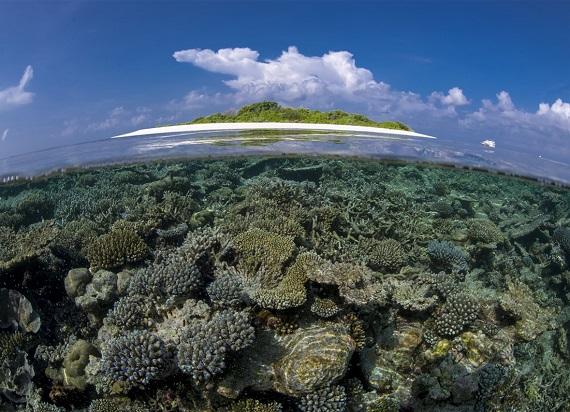 Stunning reefs in Bali