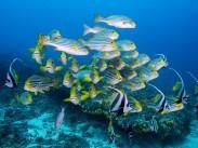 Diving in beautiful Bali